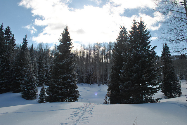 Cross Country Ski Trail at Sunlight Mountain Resort, Glenwood Springs